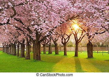 paisaje, fascinante, primavera
