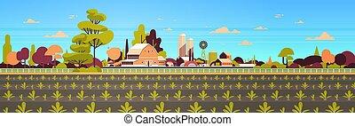 paisaje, germinated, bandera, concepto, plantas, recientemente, agricultura, tierras labrantío, horizontal, filas, plano de fondo, campo, plano, plantación, vegetal, agricultura, campo, joven