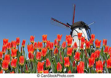 Paisaje holandés de molinos y tulipanes