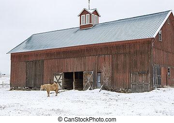 paisaje, horse., invierno, granero