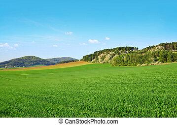 Paisaje rural de primavera con campo verde.