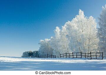 paisajes de invierno y árboles