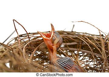 Pajarito en un nido
