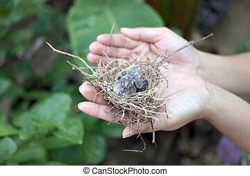 Pajaritos en un nido.