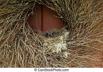 Pajaritos en un nido