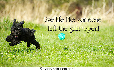 """Palabras inspiradoras """"Vive la vida como si alguien hubiera dejado la puerta abierta"""" con un adorable caniche de juguete disfrutando de la vida al máximo, felizmente rasgando en el verano."""