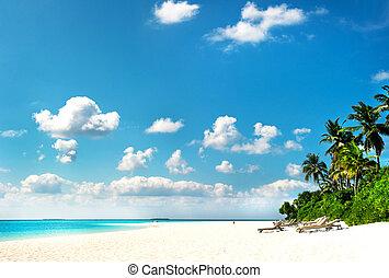 Palm Beach. Isla tropical