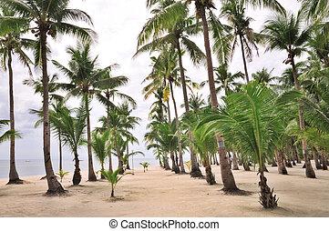 Palm Beach Valley