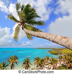 Palm Tree en la playa tropical perfecta