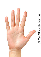 Palma de mano femenina aislada