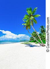 Palma de playa tropical Paraíso