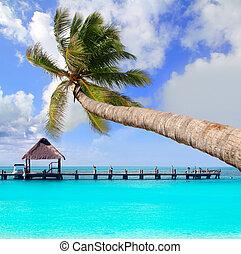 Palma en una playa tropical perfecta