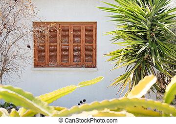 palma, grows, casa, árbol, brillante, verde, windows, joven