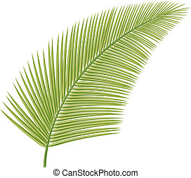 palma, (leaf, tree)