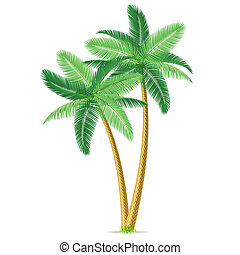 palma, tropical, árboles