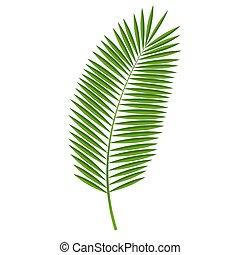 palma, vector, hoja, ilustración