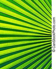 palma, verde, vívido, leaf., primer plano