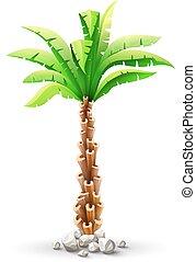 palmera de coco tropical con hojas verdes