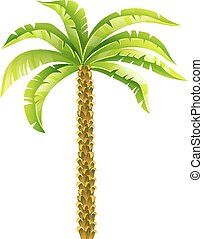 palmera de coco tropical con hojas verdes ilustración vectorial. Eps10 aislado en fondo blanco