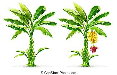 Palmeras tropicales con frutas y hojas. Vector.