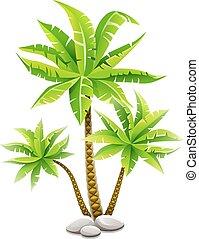 Palmeras tropicales de coco con hojas verdes