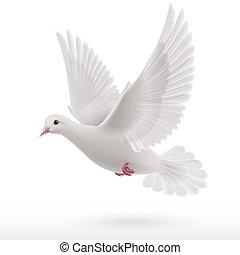paloma, blanco