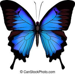Palos de mariposa azul papilio ulysses (Mountain Tragtail) vector aislado de fondo blanco