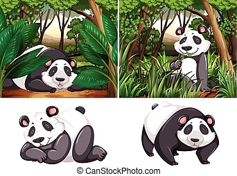 Panda en el bosque profundo