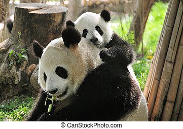 Panda gigante y bebé