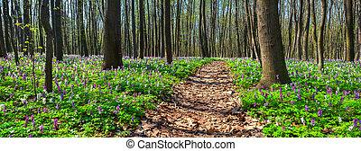 Panorama del bosque primaveral.