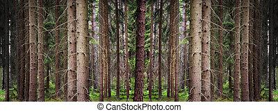 papel pintado, bosque, conífera