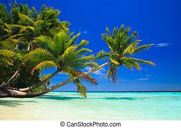 Paraiso tropical en maldivas