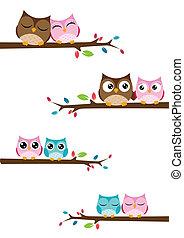 Parejas de búhos sentados sobre ramas