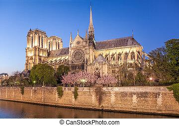 Paris, Catedral de Notre Dame por la noche durante la primavera, Francia