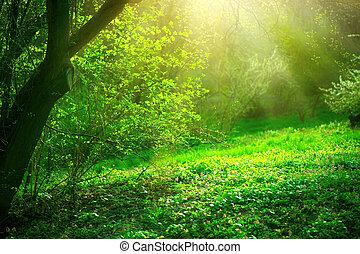 Parque de primavera con hierba verde y árboles. Hermoso paisaje natural