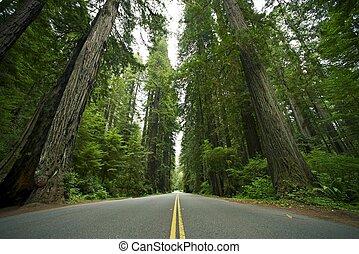 Parque Estatal Redwood