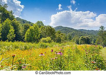 Parque Estatal Roan Mountain