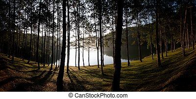 Parque Nacional de Pinos