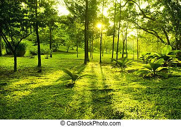 parque verde, árboles