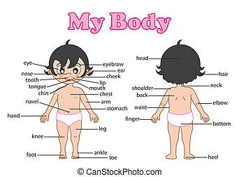 parte del cuerpo, vocabulario