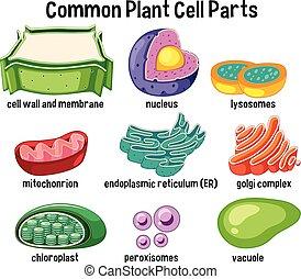 Partes comunes de las células de las plantas