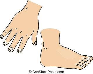 Partes de cuerpo y manos