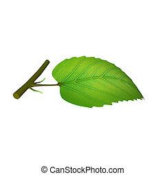 Partes de hojas