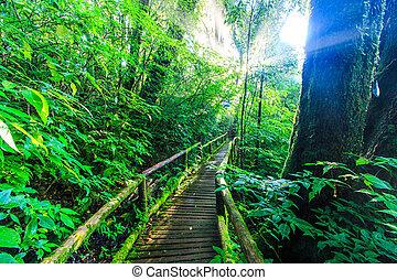 Pasaje en el bosque primigenio con luz solar.