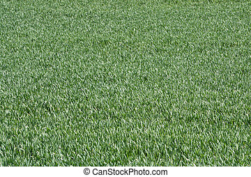 Pasto verde
