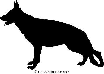 pastor alemán, perro