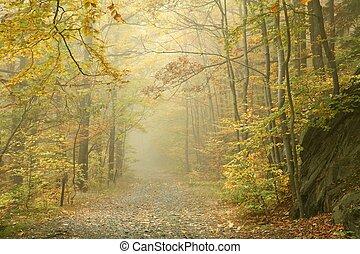 Path en el bosque de otoño