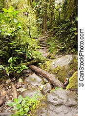 Path in the amazon