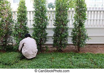 Patio, trabajo de jardín plantando árboles y hierba en el jardín