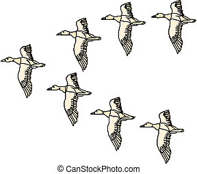 pato, mallard, vuelo
